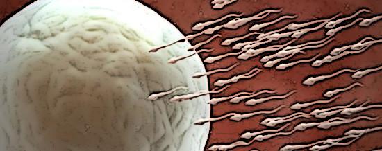 spermrace