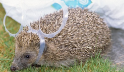 This is just wrong. If you buy a four-pack of hedgehog, you need to use all four.